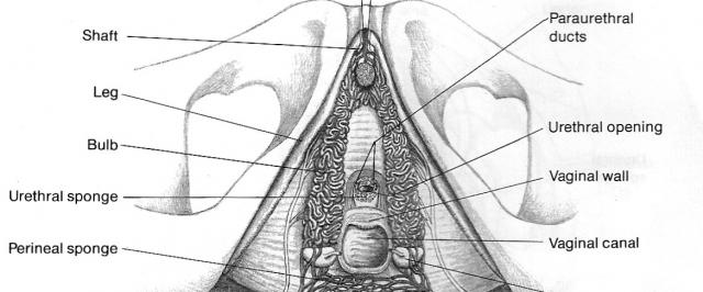Vaginal Vault