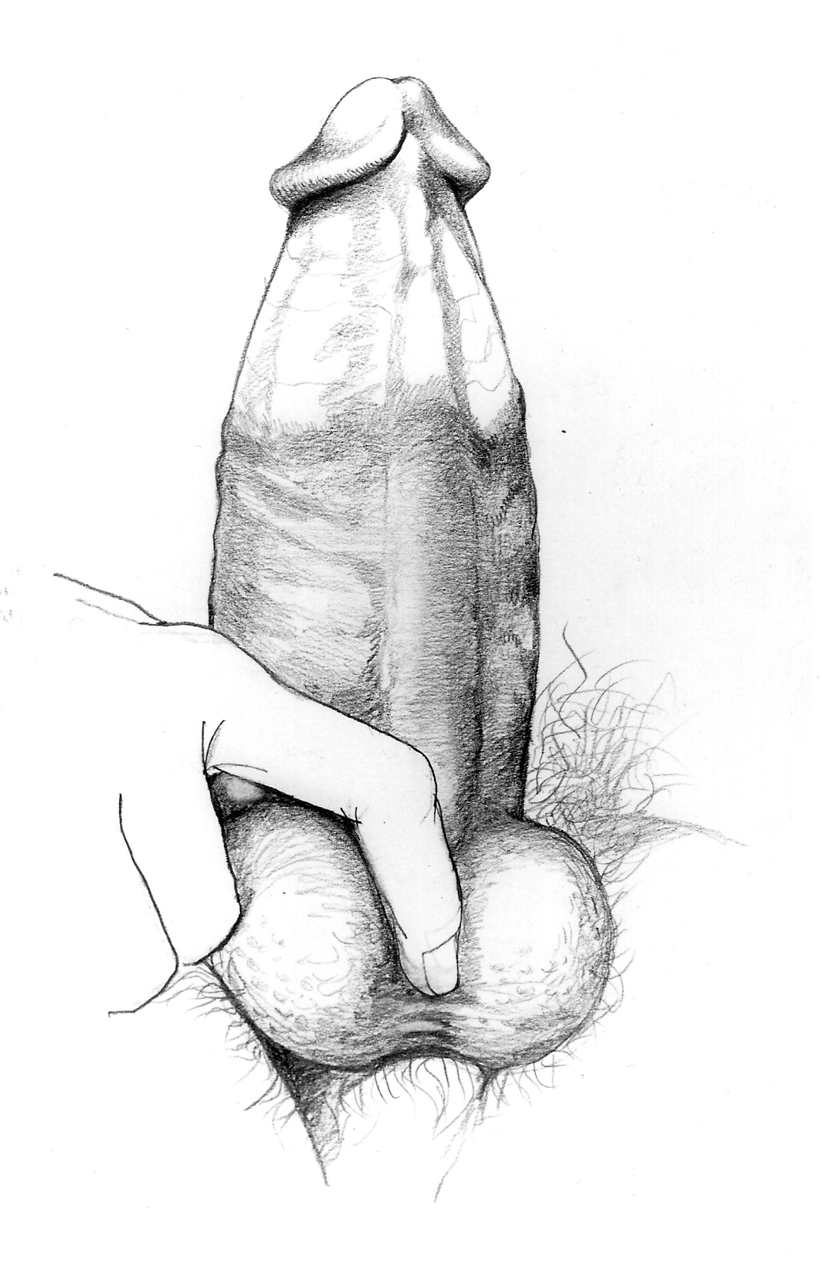 A Drawing Showing Breasts, Vagina And Penis