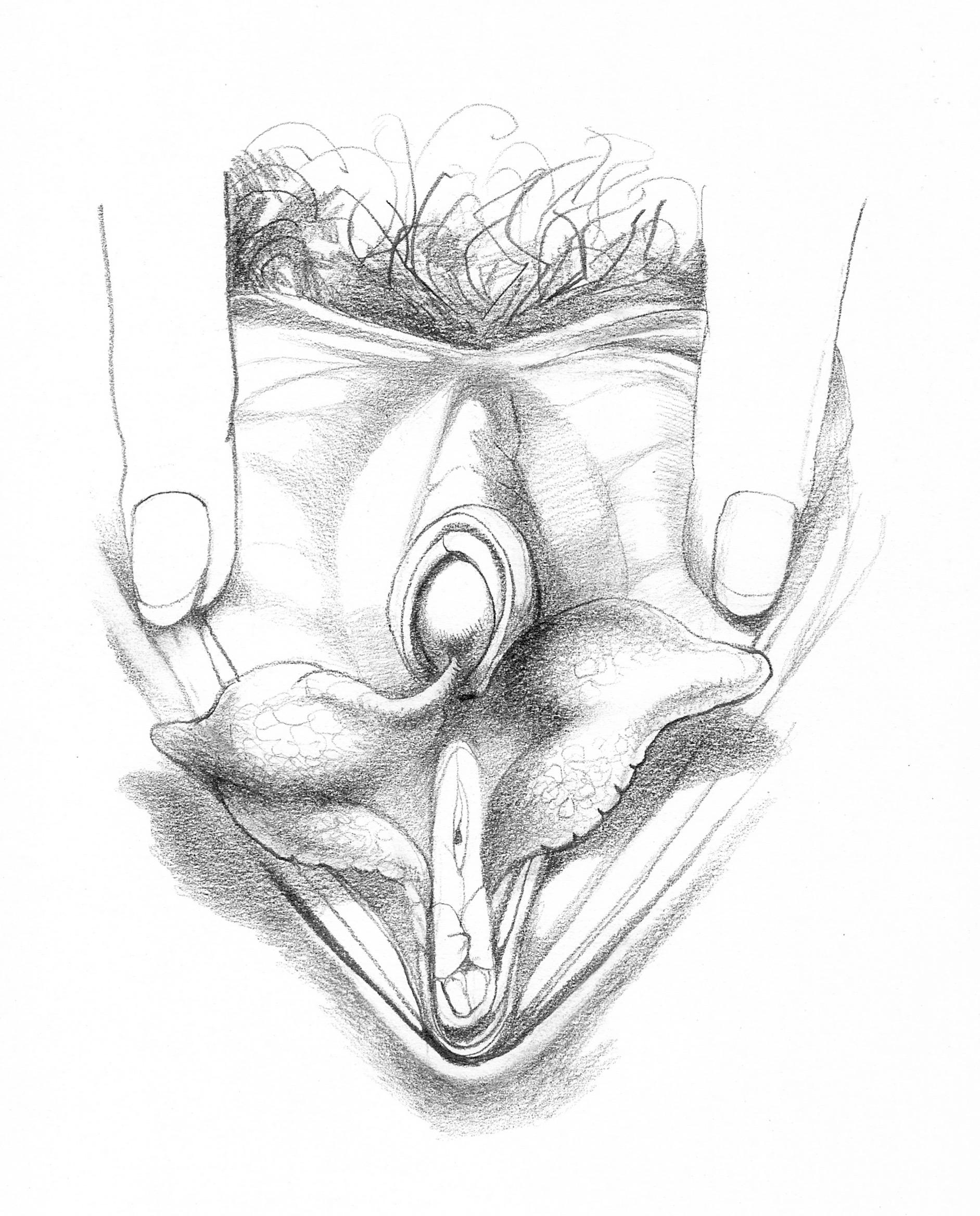 влагалище подробный рисунок - 3