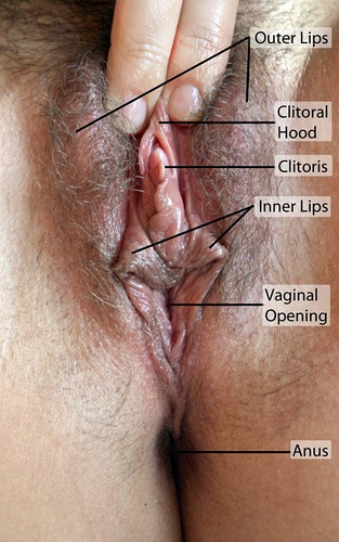 where-exactly-is-a-womans-clitoris