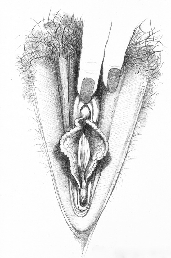 The Range of Vulva Styles from Sex for One | Betty Dodson & Carlin Ross